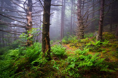 Sceniczny Lasowy Wycieczkuje Appalachian śladu Pólnocna Karolina natury Lan Zdjęcia Stock