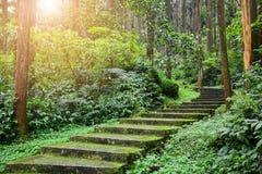 Sceniczny lasu krajobraz, wej?cie las, zielony mech i liszaj zakrywaj?cy na koszowym schody w tropikalnej d?ungli, fotografia stock