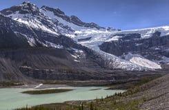 Sceniczny Lyell lodowa Icefields Parkway Banff park narodowy obraz stock