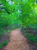 Sceniczny natura ślad zdjęcie royalty free