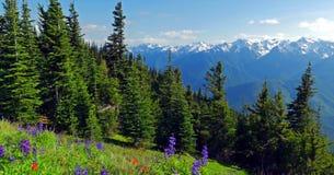 Sceniczny natury stan washington - Huraganowy wzgórze ślad, Olimpijski park narodowy zdjęcia royalty free