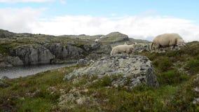 Sceniczny Norwegia góry krajobraz z caklami zdjęcie wideo