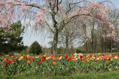 Sceniczny ogród na ładnym wiosny popołudniu obraz stock