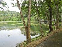 Sceniczny przerastający staw pod górą z dżunglą w chmurnej pogodzie, Phang Nga, Tajlandia obraz royalty free