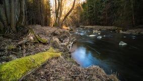 Sceniczny strumień w lasu krajobrazie Lomnice rzeka, Południowa cyganeria, Europa zdjęcie stock