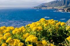 Sceniczny Vista na Kalifornia stanu trasie 1 Fotografia Royalty Free