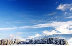 Sceniczny widok śnieżny sosnowy las w Bawarskich Alps w zimie Obrazy Royalty Free