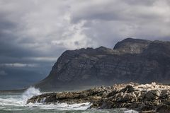 Sceniczny widok góra i linia brzegowa w Kleinmond, Zachodni przylądek, Południowa Afryka obraz royalty free
