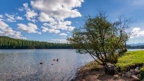 Sceniczny widok Holandia jezioro w Montana zdjęcia stock