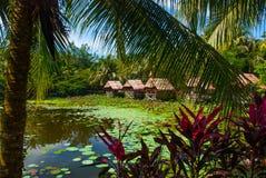 Sceniczny widok jezioro z wodnymi lelujami i drzewkami palmowymi, mały gazebo z pokrywającym strzechą dachem Borneo, Malezja Zdjęcie Royalty Free