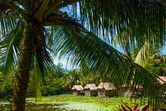 Sceniczny widok jezioro z wodnymi lelujami i drzewkami palmowymi, mały gazebo z pokrywającym strzechą dachem Borneo, Malezja Zdjęcia Royalty Free