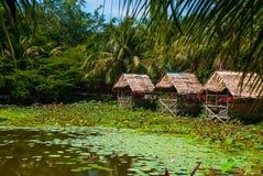 Sceniczny widok jezioro z wodnymi lelujami i drzewkami palmowymi, mały gazebo z pokrywającym strzechą dachem Borneo, Malezja Fotografia Stock