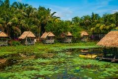Sceniczny widok jezioro z wodnymi lelujami i drzewkami palmowymi, mały gazebo z pokrywającym strzechą dachem Borneo, Malezja Obrazy Stock