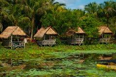 Sceniczny widok jezioro z wodnymi lelujami i drzewkami palmowymi, mały gazebo z pokrywającym strzechą dachem Borneo, Malezja Fotografia Royalty Free