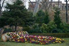 Sceniczny widok Kolorowy Flowerbed Zdjęcia Royalty Free