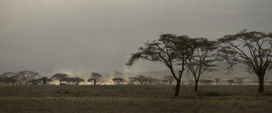 Sceniczny widok na Serengeti parku narodowym, Tanzania, Afryka Fotografia Stock