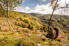 Sceniczny widok nastolatka dopatrywanie przy zmierzch g?rami, Peneda-Geres park narodowy, p??nocny Portugalia obrazy stock