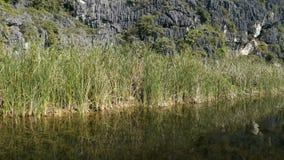 Sceniczny widok piękna kras sceneria, bagna zbiory wideo