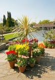 Sceniczny widok pokaz wiosna tulipany z małym jeziorem wodną fontanną w tle i obrazy stock