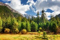 Sceniczny widok pradawny las i nakrywać góry zdjęcie stock