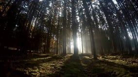 Sceniczny widok promienie promienieje przez lasu słońce zdjęcie wideo