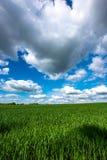 Sceniczny widok Pszeniczny pole Przeciw Chmurnemu niebu Obraz Stock