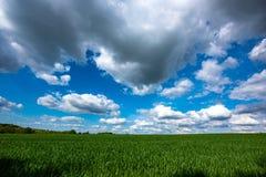Sceniczny widok Pszeniczny pole Przeciw Chmurnemu niebu Zdjęcie Royalty Free