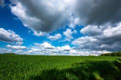 Sceniczny widok Pszeniczny pole Przeciw Chmurnemu niebu Obrazy Royalty Free