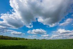 Sceniczny widok Pszeniczny pole Przeciw Chmurnemu niebu Fotografia Royalty Free