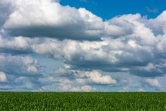 Sceniczny widok Pszeniczny pole Przeciw Chmurnemu niebu Zdjęcia Royalty Free
