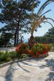 Sceniczny widok round kwiaty i drzewko palmowe zdjęcie royalty free