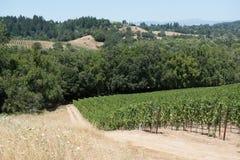 Sceniczny widok winogrady winnica w Napy dolinie, Kalifornia i wzgórzach w tle, Obrazy Royalty Free