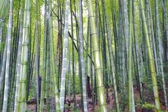 Sceniczny wzgórze bambusa las Zdjęcie Stock