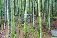 Sceniczny wzgórze bambusa las Obraz Stock