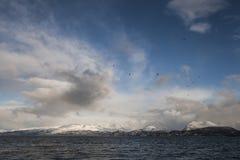 Chmury, ptaki i morze, Zdjęcia Stock