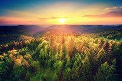 Sceniczny zmierzch nad lasem Obrazy Royalty Free
