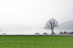 Sceninc foggy morning by the lake Royalty Free Stock Images