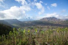 Scenisk bakgrund av koloniskördar i Bali Indonesien arkivbilder