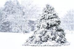 Scenisk bild av trädet som tungt täckas med snö royaltyfria foton