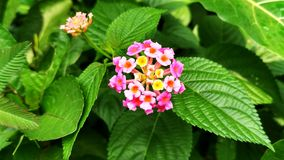 Scenisk blomma Arkivbild