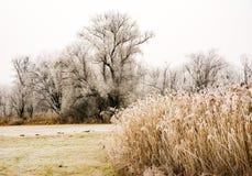 Scenisk dimmig vinter med frostade träd Arkivbild