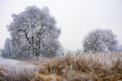 Scenisk dimmig vinter med frostade träd Royaltyfri Bild