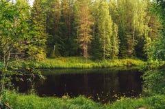 Scenisk flod för skog Royaltyfria Bilder
