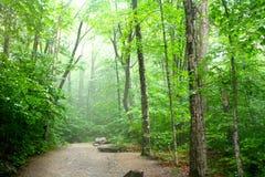 Scenisk flod i skog royaltyfri foto