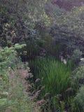 Scenisk flod newfoundland Royaltyfria Foton