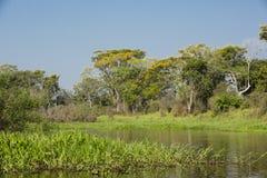 Scenisk flodpassage i norr Pantanal, Brasilien Arkivbild
