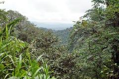 Scenisk framtidsutsiktpunkt i Cotacachi Cayapas den ekologiska reserven Arkivbild