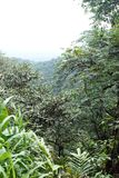 Scenisk framtidsutsiktpunkt i Cotacachi Cayapas den ekologiska reserven Fotografering för Bildbyråer