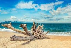 Scenisk härlig sikt av den Nha Trang stranden arkivbild
