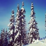 Scenisk instagram av träd som täckas i insnöad vinter Fotografering för Bildbyråer